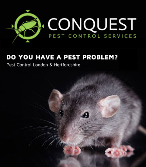London Pest Control Company